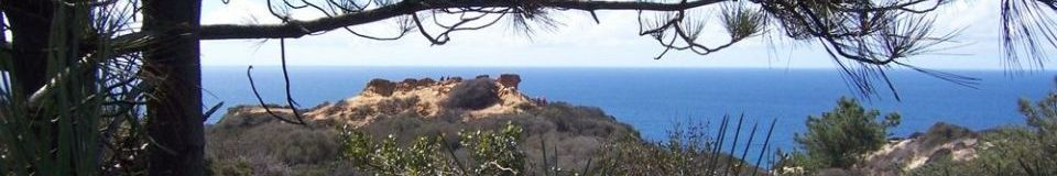 Torrey Pines State Natural Reserve