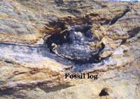 Fossil log