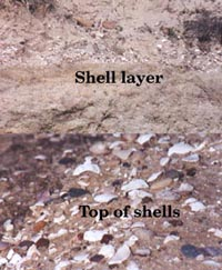 Fossil shell layers