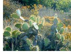 sb-cactus-sm